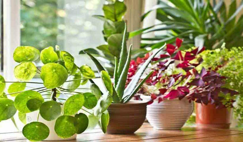 Plant Vastu Tips